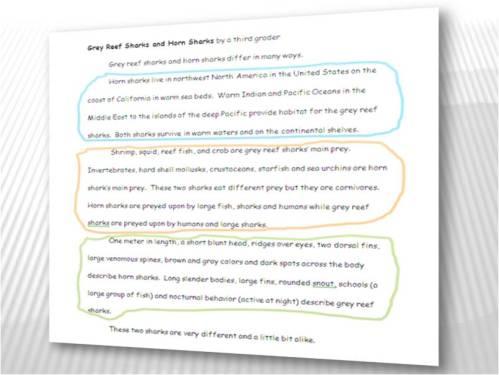 Essay on sharks by a third grader.